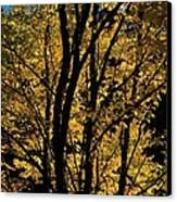 Golden Colors Of Autumn In New England  Canvas Print