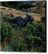Golden Hills Of Summer Canvas Print