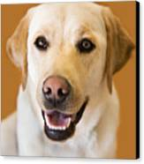 Golden Lab Canvas Print