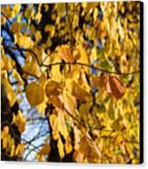 Golden Leaves Canvas Print
