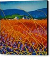 Golden Meadow Canvas Print by John  Nolan