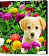 Golden Puppy In The Zinnias Canvas Print
