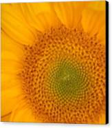 Golden Sunflower Canvas Print