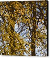 Golden Tree 2 Canvas Print