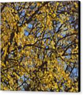 Golden Tree 3 Canvas Print