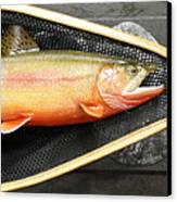 Golden Trout River Slice Canvas Print by Eric Knowlton