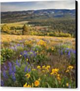 Golden Valley Canvas Print