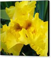 Golden Yellow Iris Flower Garden Irises Flora Art Prints Baslee Troutman Canvas Print