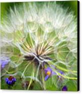 Gone To Seed Canvas Print