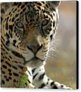 Gorgeous Jaguar Canvas Print by Sabrina L Ryan