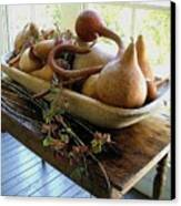 Gourds In Bowl Canvas Print