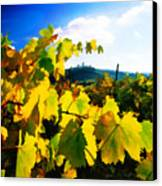 Grape Leaves And The Sky Canvas Print by Elaine Plesser