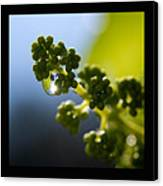 Grape Vines And Water Drops Triptych Canvas Print by Lisa Knechtel
