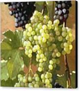 Grapes Canvas Print by Edward Chalmers Leavitt