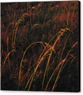 Grasses Glow Golden In Evenings Light Canvas Print by Raymond Gehman