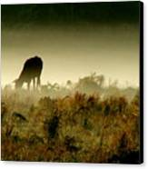 Grazing On A Misty Morning Canvas Print by Kimberly Camacho