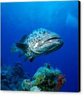 Great Barrier Reef Canvas Print by Peter Stone - Printscapes