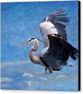Great Blue Heron  Canvas Print by Betty LaRue