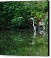 Great Blue Heron Hunting Fish Canvas Print