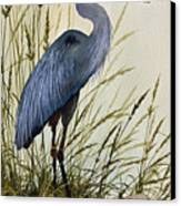 Great Blue Heron Splendor Canvas Print by James Williamson