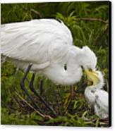 Great Egret And Chick Canvas Print