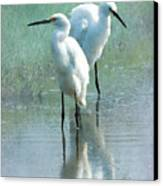Great Egrets Canvas Print by Betty LaRue