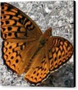 Great Spangled Fritterlary Canvas Print