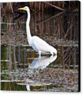 Great White Egret Canvas Print by James Marvin Phelps