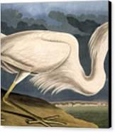 Great White Heron Canvas Print by John James Audubon
