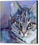 Green Eyed Tabby - Thomasina Canvas Print by Kimberly Santini
