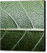 Green Leaf Geometry Canvas Print