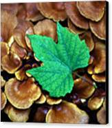 Green Leaf On Fungus Canvas Print
