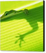 Green Lizard Canvas Print by Bill Brennan - Printscapes