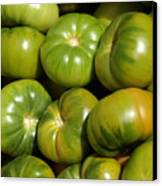 Green Tomatoes Canvas Print by Frank Tschakert