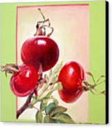 Grenadine Canvas Print