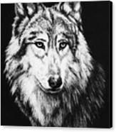 Grey Wolf Canvas Print by Melodye Whitaker