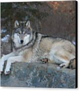 Grizzer Intelligence Personified Canvas Print by Gerry Sibell