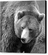 Grizzly Bear And Black And White Canvas Print