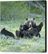 Grizzly Romp - Grand Teton Canvas Print by Sandra Bronstein