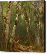 Group Of Trees Canvas Print