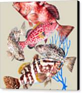 Grouper Montage Canvas Print
