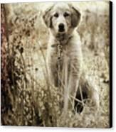 Grunge Puppy Canvas Print by Meirion Matthias