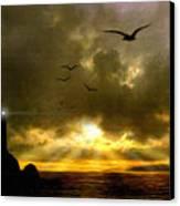 Gull Flight Canvas Print by Robert Foster