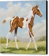 Half Arabian Pinto Filly Canvas Print by Dorothy Coatsworth