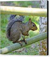 Happy Squirrel Canvas Print