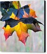 Harbinger Of Autumn Canvas Print by Sean Griffin