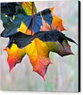 Harbinger Of Autumn Canvas Print by Sean Griffin