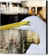 Harbor Egret Canvas Print