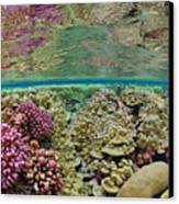 Hard Coral Carpets A Shallow Seafloor Canvas Print by Brian J. Skerry