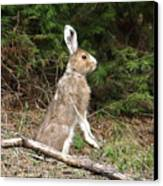 Hare That Canvas Print